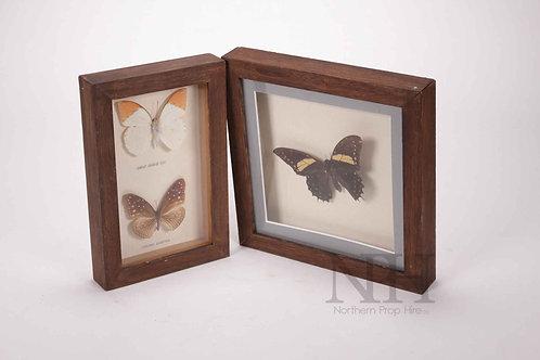 Cased butterflys