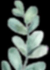 leaf_edited.png