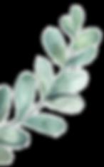 leaf_30_R.png