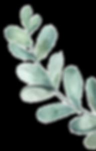 leaf_30_L.png