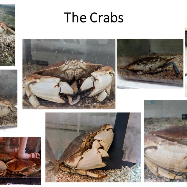 Screen_shot_Crabs.png