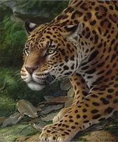 34 OSCAR ED LIM Campos - Leopardo  98  x