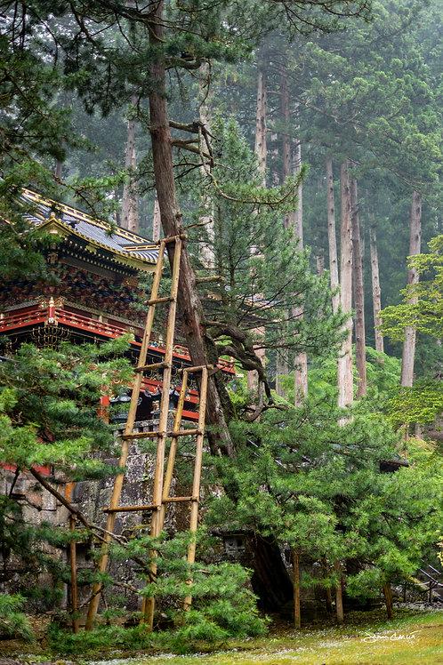 Nikkō Tōshō-gū Shrine - Leaning Tree