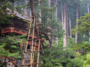 Nikko. Beautiful. Decay.