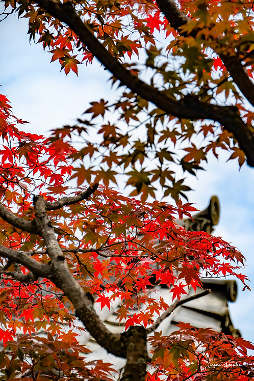 Temple Leaves - Kyoto