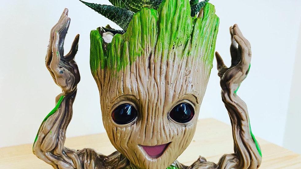 "Groot with Haworthia 6"" tall x 3"" wide"