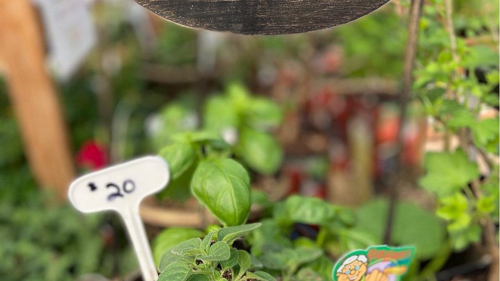 Herb  pot  basil &  oregano