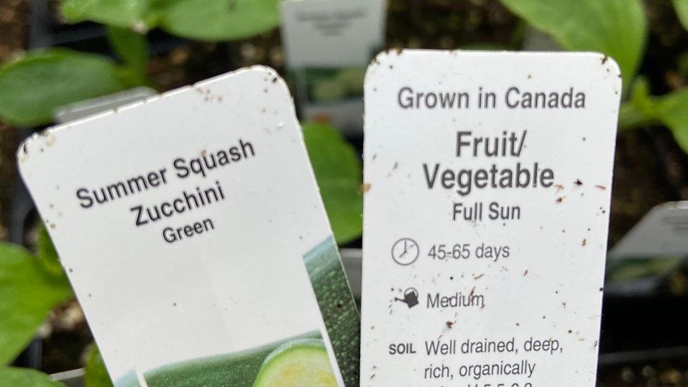 "Zucchini  Green 2.5"" pot"