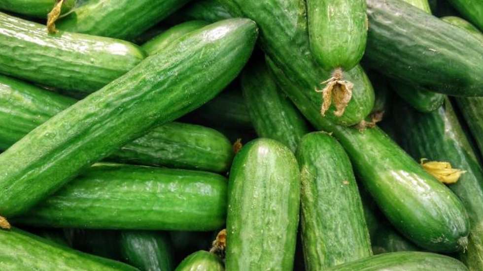Long English Cucumber 6 pack