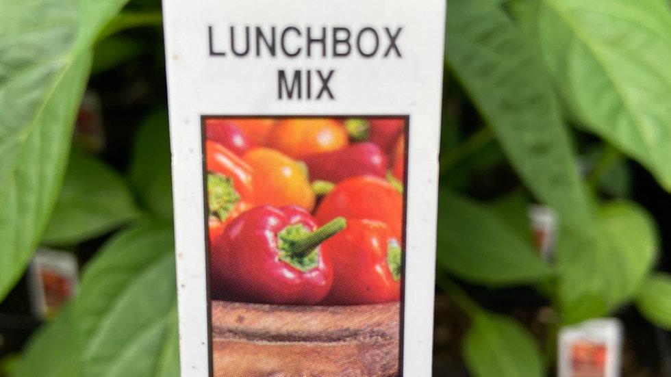 """Mini pepper mix 4"""" pot"""