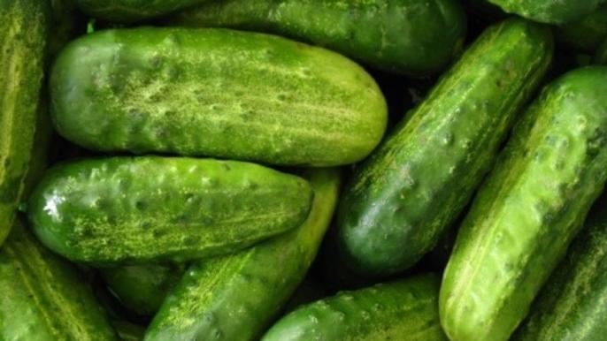 Pickling cucumber  6 pack