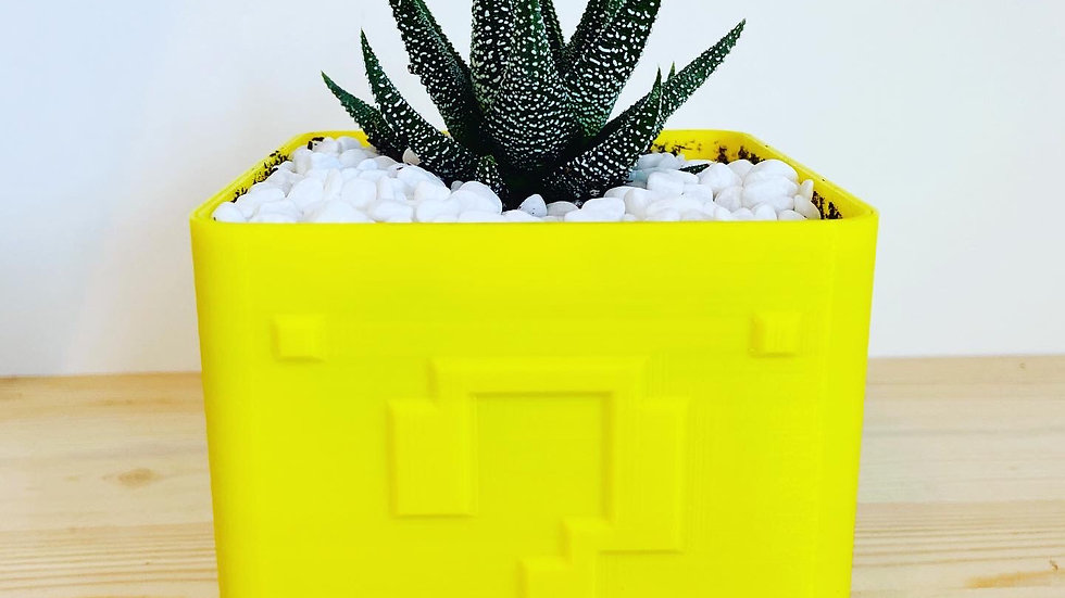 "Mario Cube Haworthia plant  4""x4""x4"""