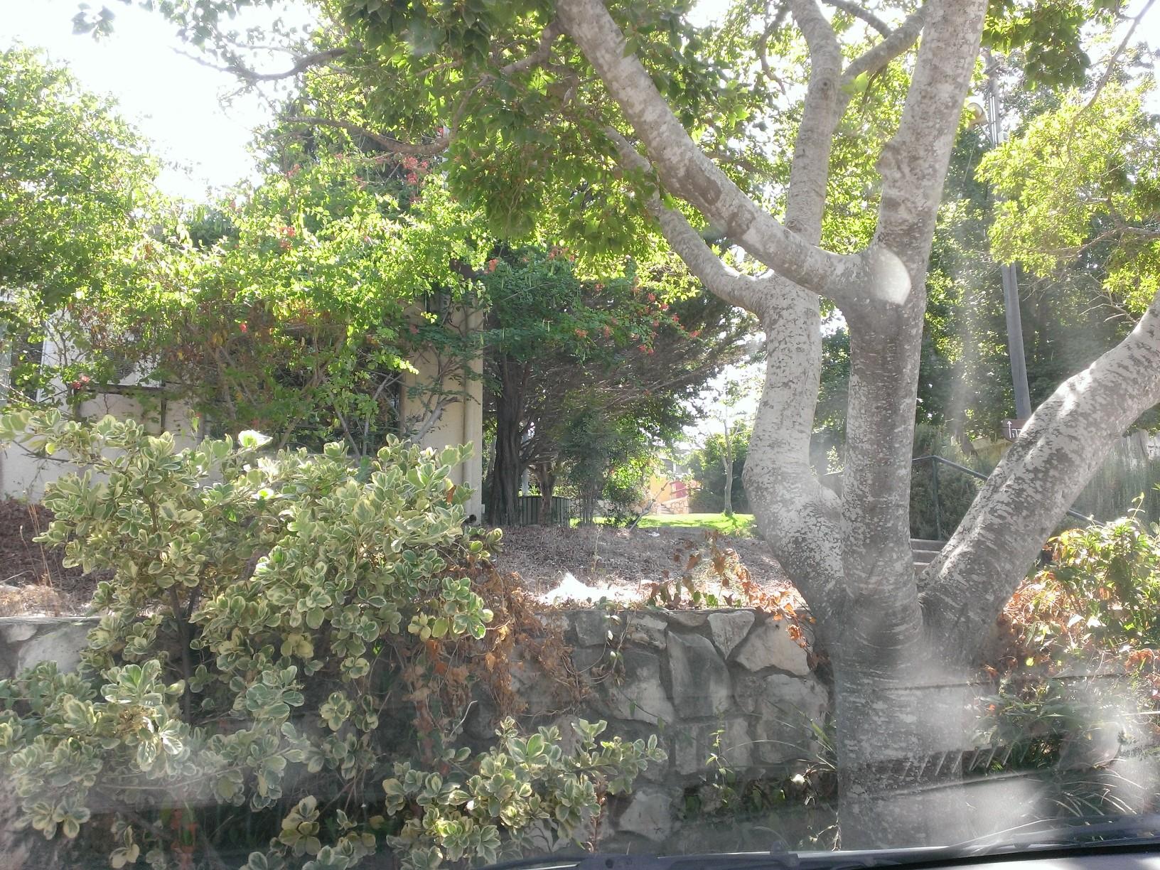 הנוף של קיבוץ הרדוף בדרך אל המסעדה