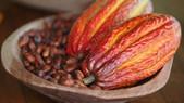Saiba quem são os maiores produtores de Cacau da Bahia e o ranking no Baixo Sul
