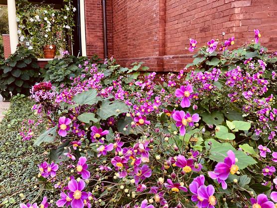 West flowers.jpg