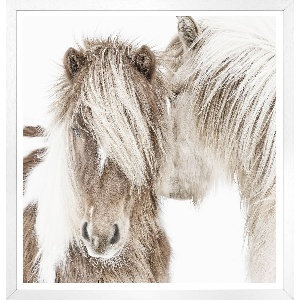 Idilic Ponies