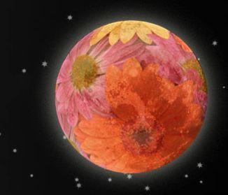 Flower Full Moon Tonight & Considering Joy...