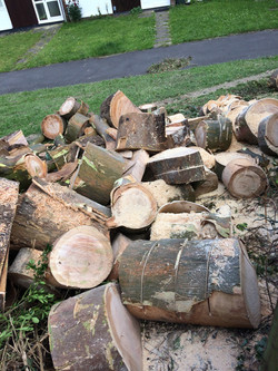 DS Tree Services Log supply