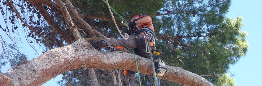 Ds Tree Services Arborist Tree Surgeon Alton Hampshire Surre