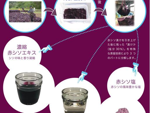 静岡県産赤紫蘇アロマ&エキスの資料が出来ました!
