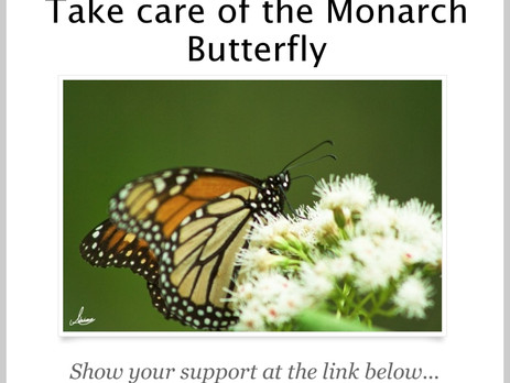 Save the Monarch Butterflies