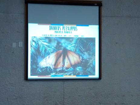 "Conferencia ""Mirame volar - Mariposa Monarca"""