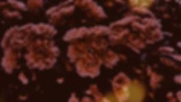 Sepia%252520Flowers_edited_edited_edited