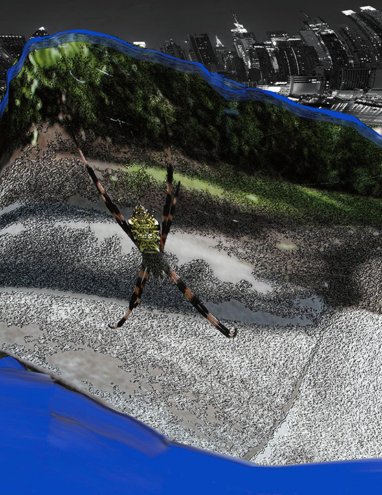 spider in the city-72.jpg
