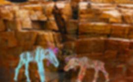 moose on the rocks-72.jpg