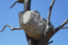 rock in tree-72.jpg