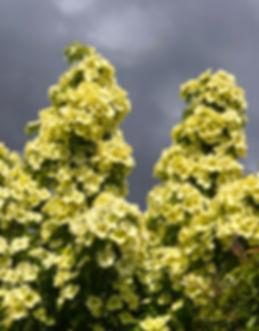 tower of flowers-72.jpg