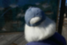 betty hair and baseball cap.JPG