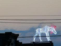 neon moose - bar harbor-72.jpg