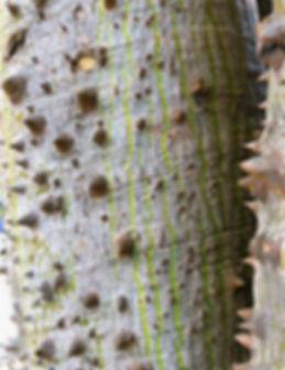 spiky tree bark-72.jpg