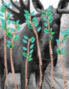 new moose-72.jpg