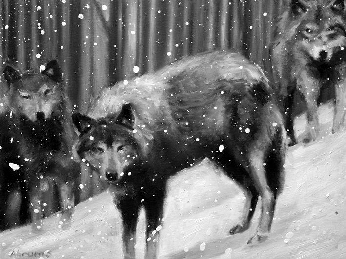 5wolf12x16.jpg