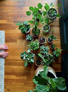 house plant bubble. magazine