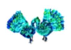 id5988_r_05_peacocks.jpg