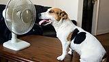 DOG WITH FAN.jpg