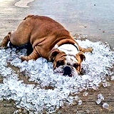 dog on ice.jpg