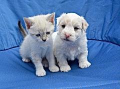 puppy-2726896_1920.jpg
