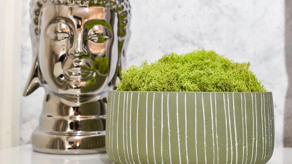 Moss bowl