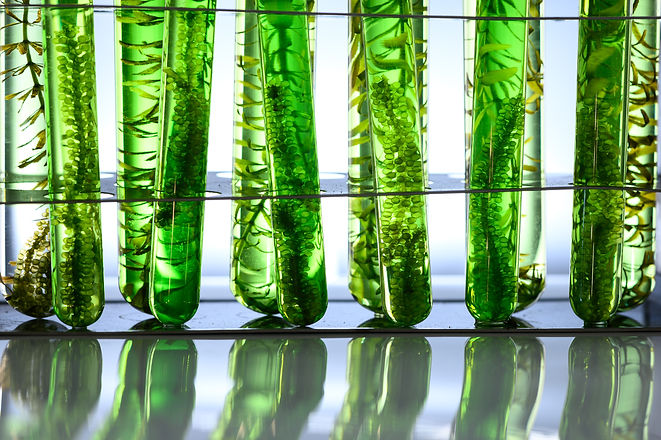 algae research in laboratories, biotechn
