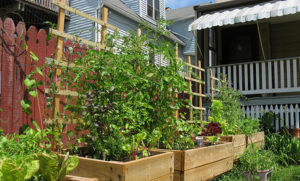 Victory Gardens 2.0: Grow Your Own Food During Covid-19 Pandemic