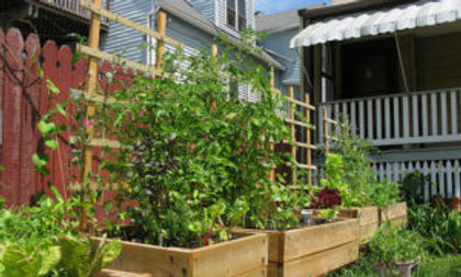4-uses-for-your-urban-backyard-Ideas-4-H