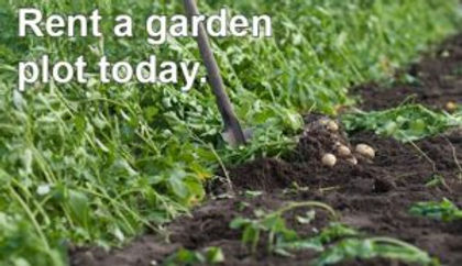 Rent-a-garden-plot-300x173.jpg