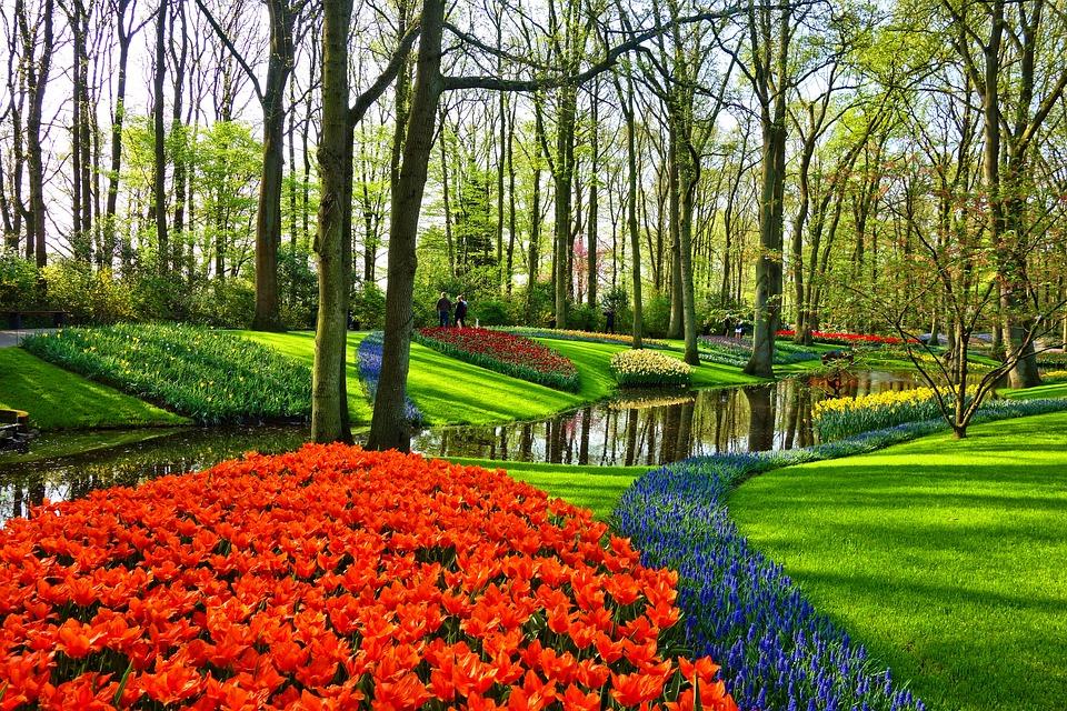 Jardim de Flores Holanda