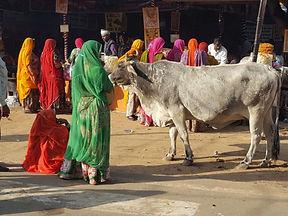 india-woman-bull.jpg
