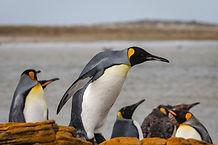 Bluff-Cove-Falkland-Islands-HGR-142067_1