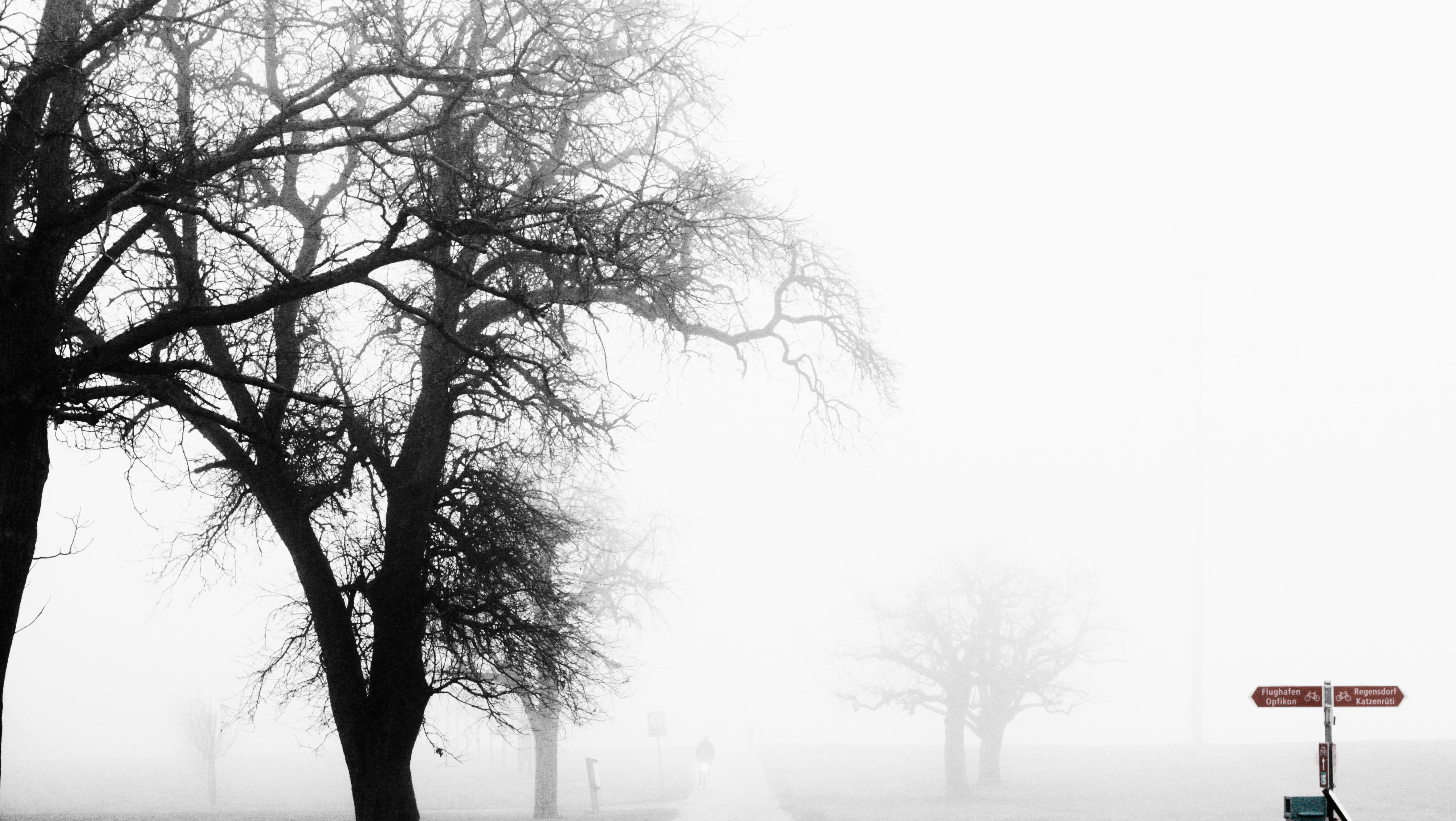 Rümlang_landscape_fog_bike_trees